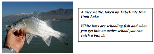 white bass fishing tips
